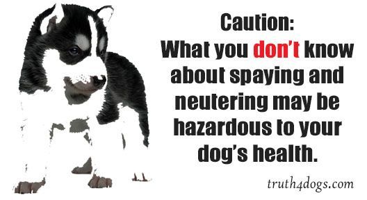 Caution What You Don T Know About Spaying Neutering May Be