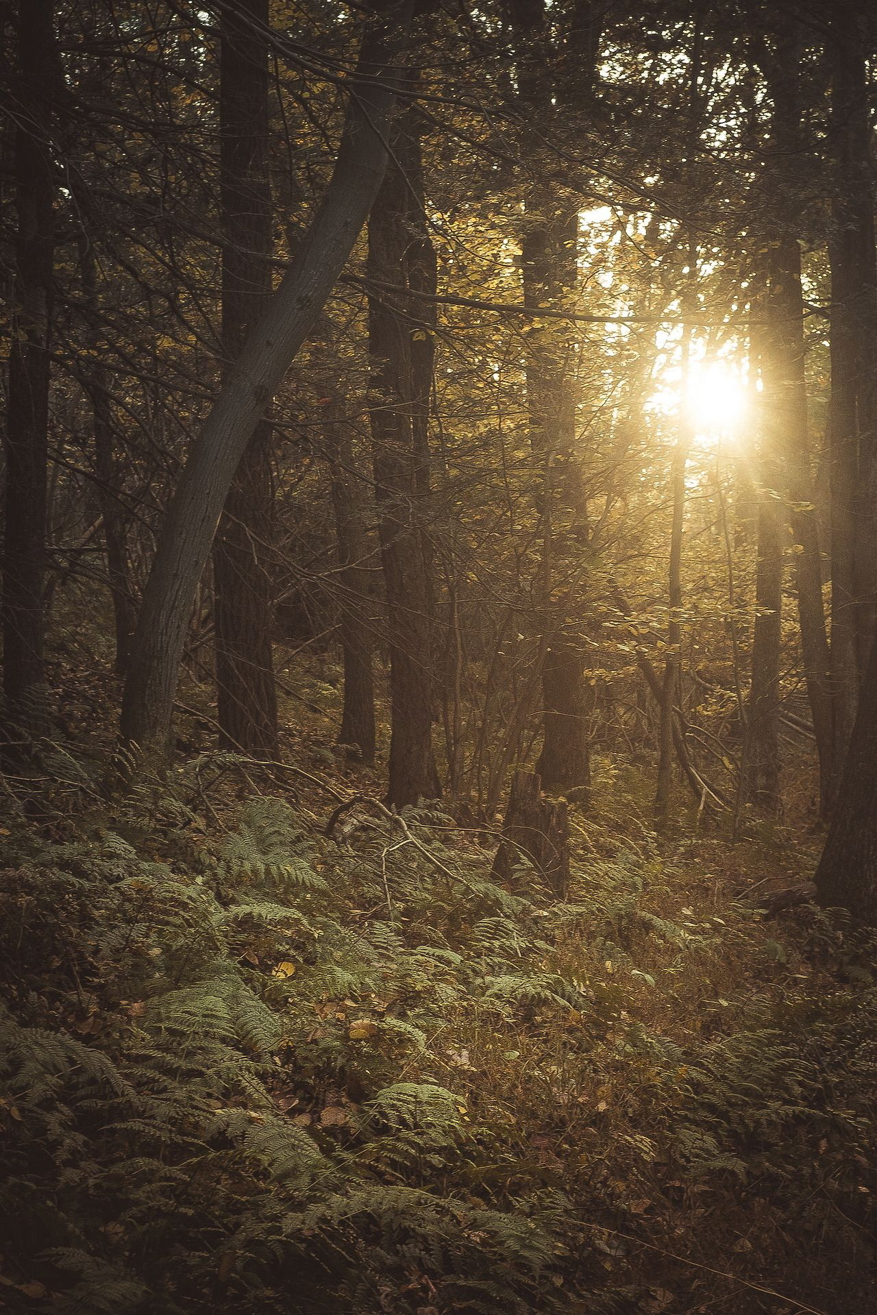 the woods - when we wander by (Colin Gallagher) | Website