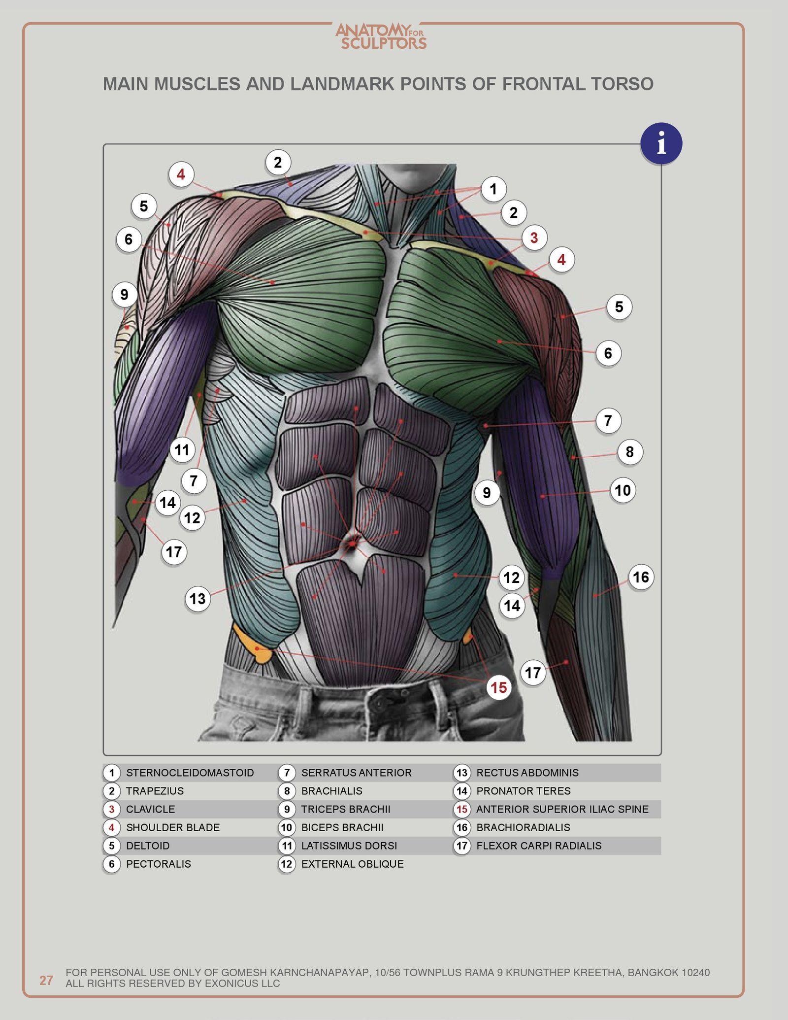 ANATOMY FOR SCULPTORS | PDF to Flipbook | anatomy | Pinterest ...