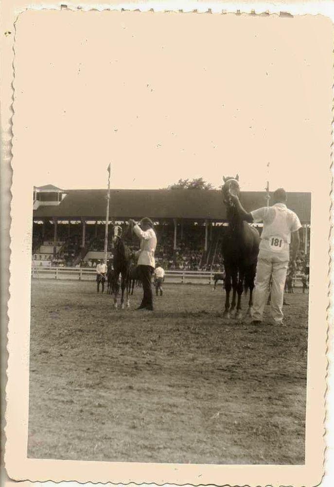 Vintage Antique Photograph Men in Arena Preparing Horses for Equestrian Show