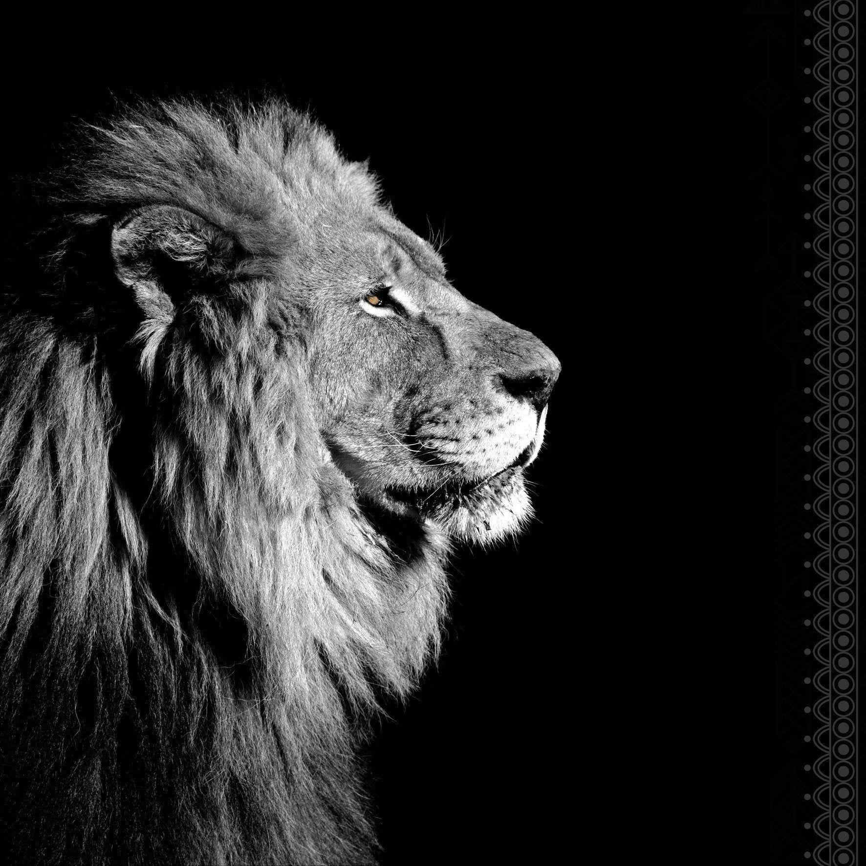 Plexiglass Imprime Noir Blanc Lion De Profil Noir Blanc Artis L 90 X H 90 Cm In 2020 Lion Photography Lion Eyes Lion Pictures