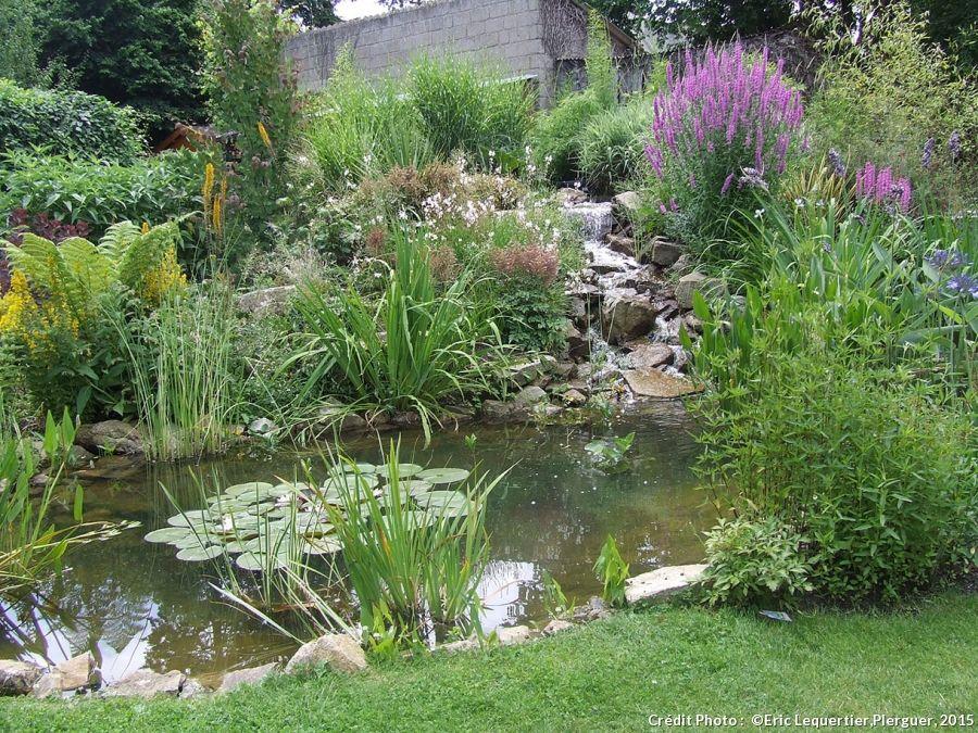 cr er un bassin champ tre le bassin bassin et les cascades. Black Bedroom Furniture Sets. Home Design Ideas