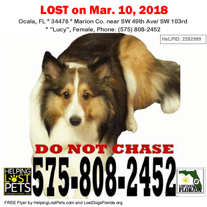 Have You Seen This Lost Dog Lostdog Lucy Ocala Sw 49th Ave
