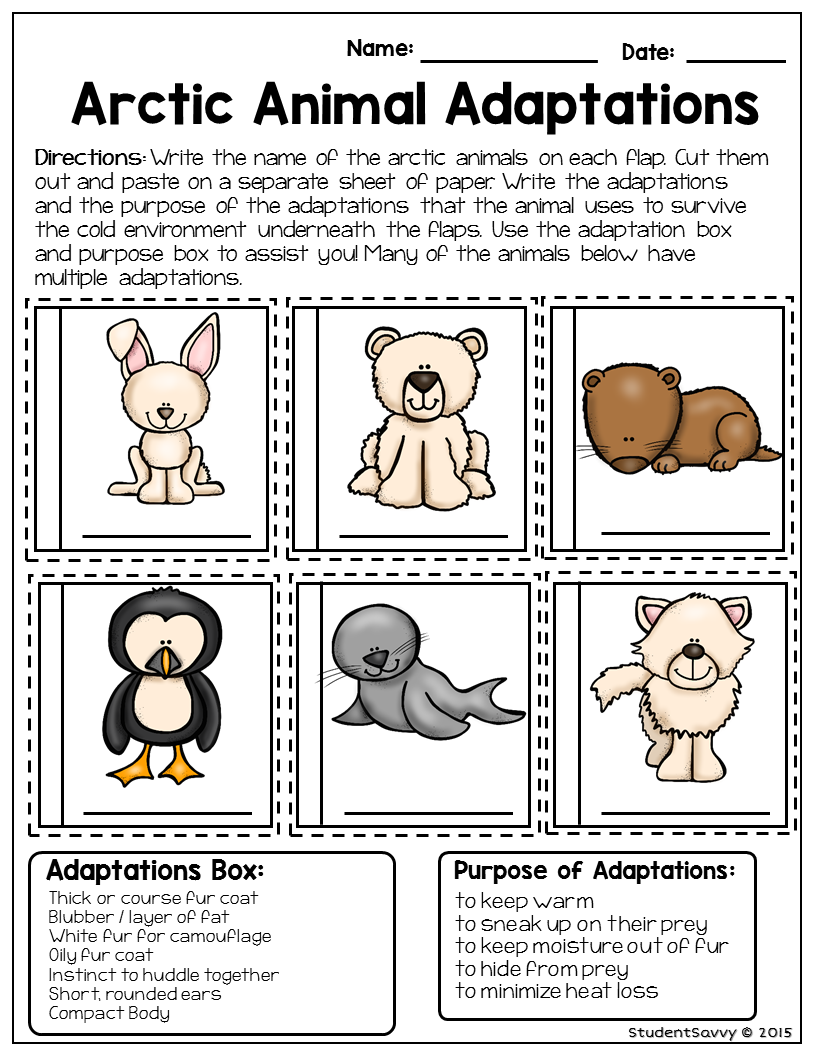 worksheet Adaptations Worksheet animal adaptations science animalsanimal students cut and paste flaps where they match arctic animals with their cold weather also discover the purpose of these