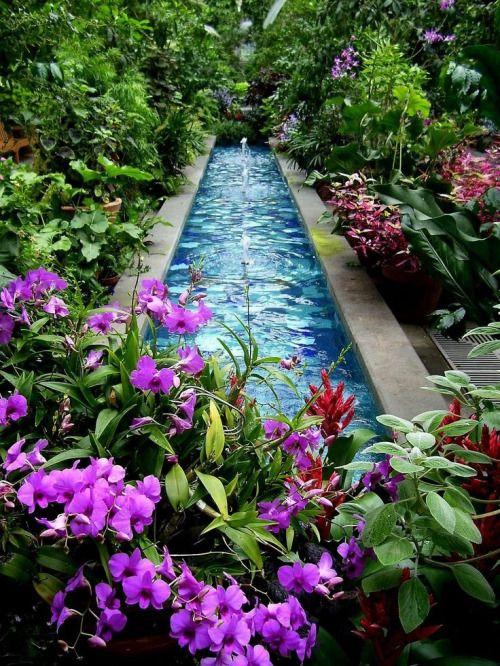 lush garden. Tropical. Water feature...