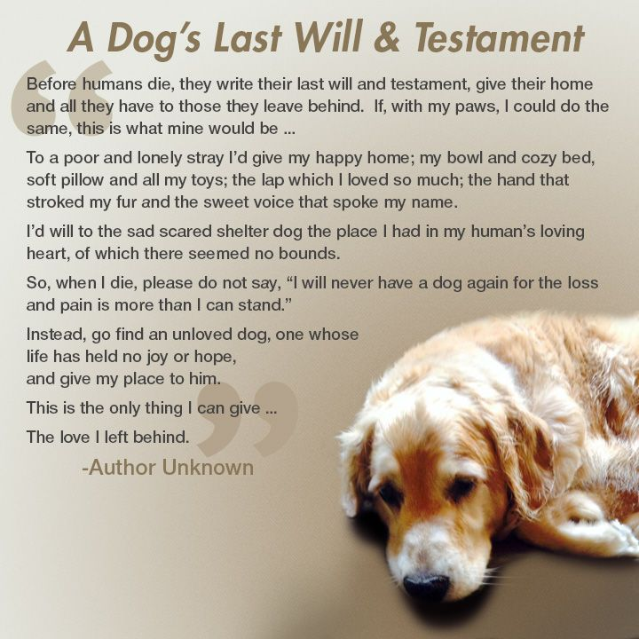 View source image Last will and testament, Pet loss