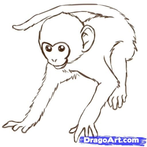 Monkeys drawings how to draw monkeys step 12