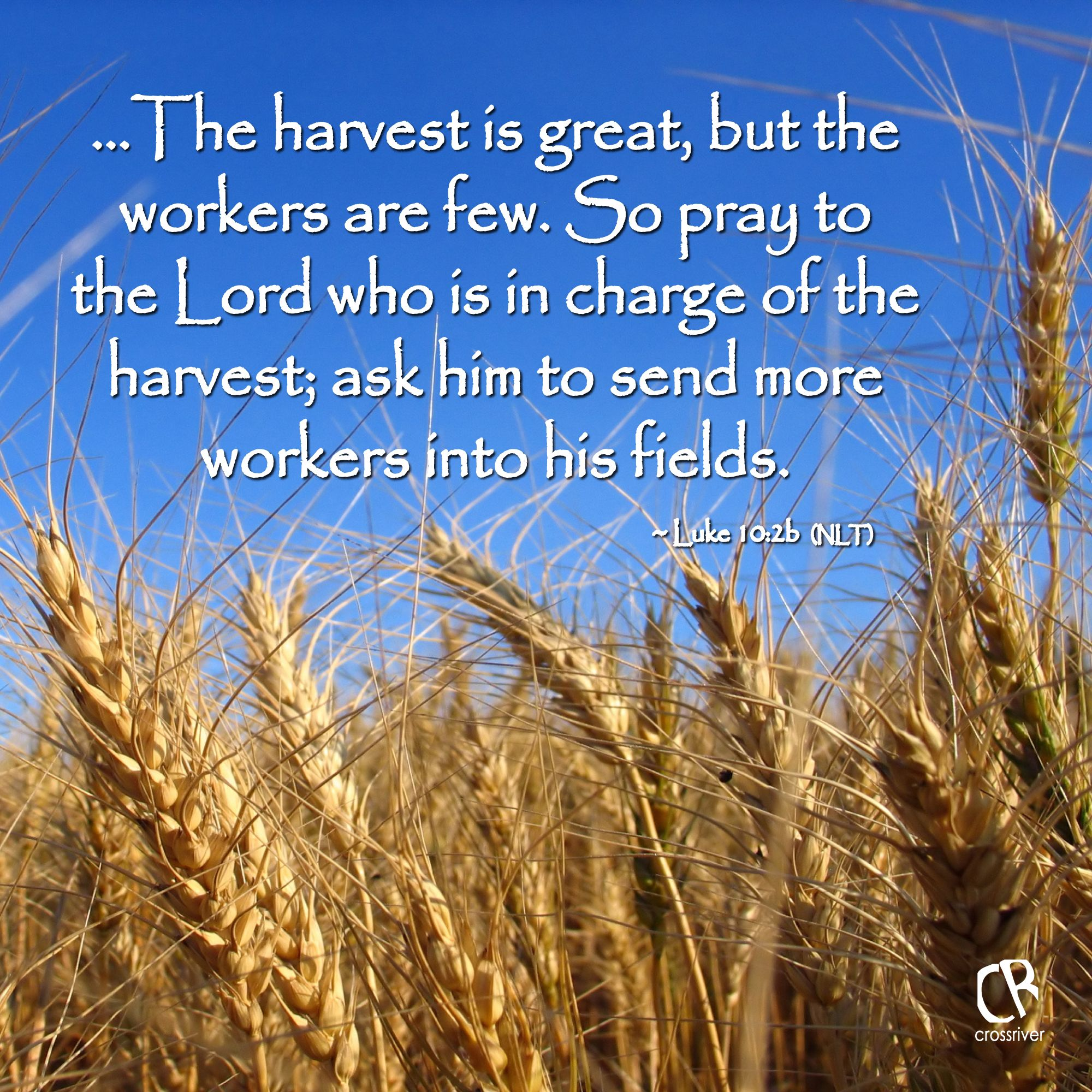 Bible Verse Quotes: ...The Harvest Is Great, But The Workers Are Few. So Pray