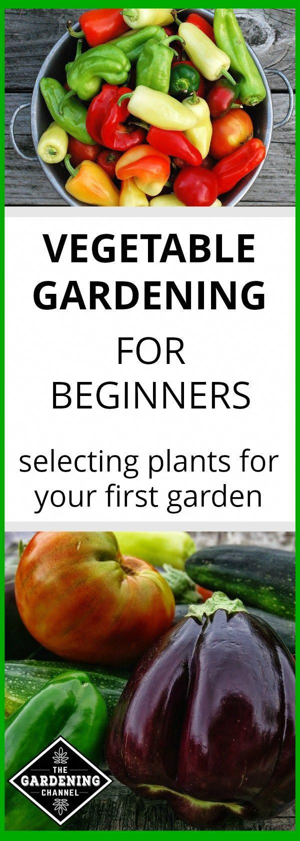 How to Choose Plants for Your First Vegetable Garden #howtogrowvegetables