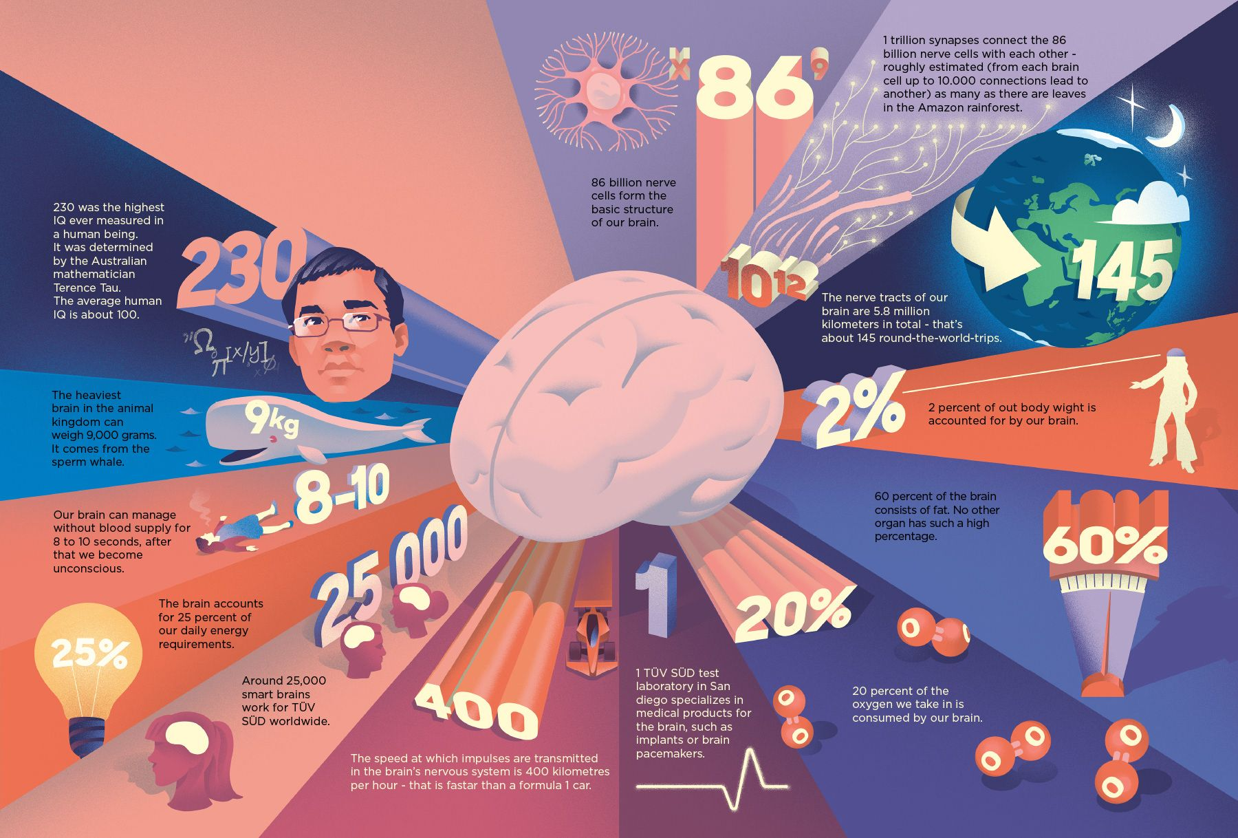 Did You Know On Behance Brain Facts Infographic Did You Know