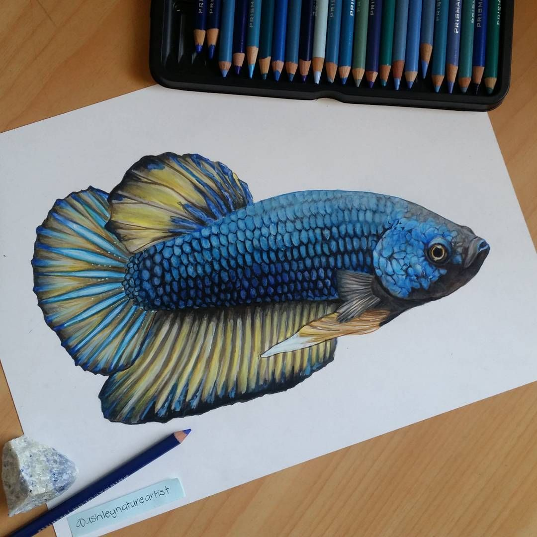 This is a picture of Accomplished Realistic Fish Drawing
