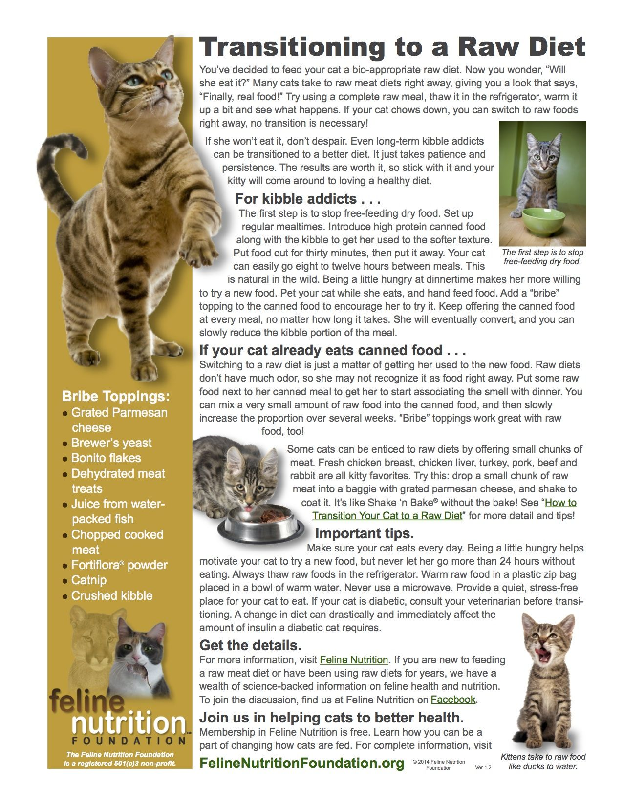 Feline Nutrition One Page Guides Raw Diet Cat Nutrition Animal Nutrition