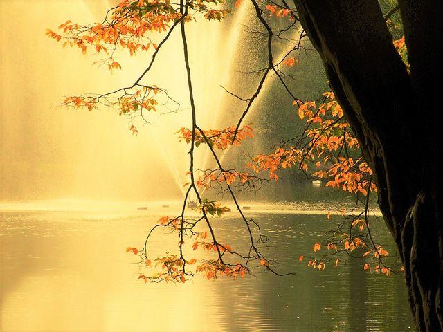 goldene Blätter mit Fontänennebel im Gegenlicht | by new_day_new_life