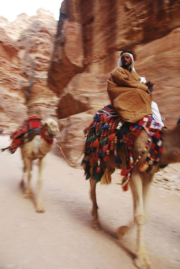 Camels across the Middle East by Kim Gosiaco, via Behance
