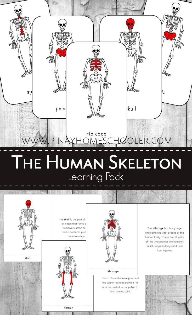 Montessori Human Skeleton 3 Part Cards and Definitions | Homeschool ...