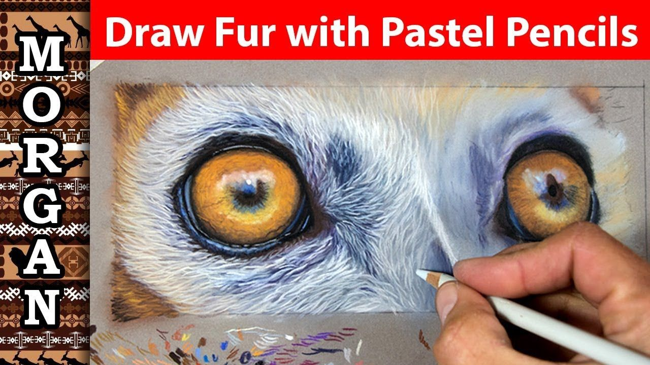 how to draw fur with pastel pencils youtube drawings to try