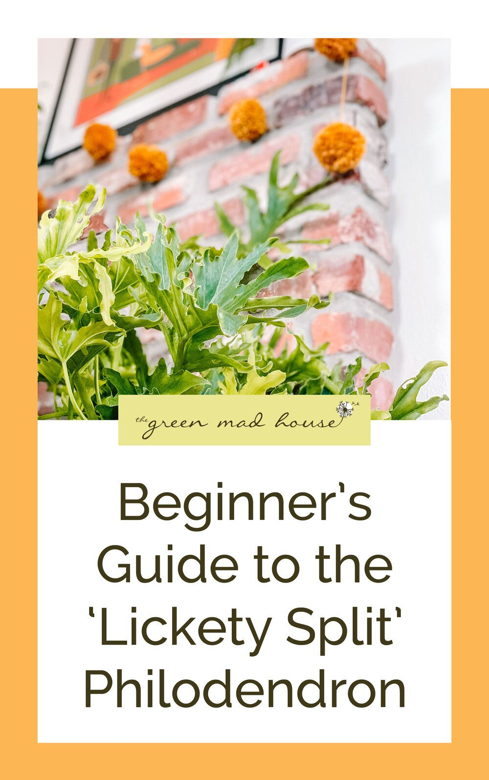 Beginner S Guide To The Lickety Split Philodendron Philodendron House Plant Care Beginners Guide