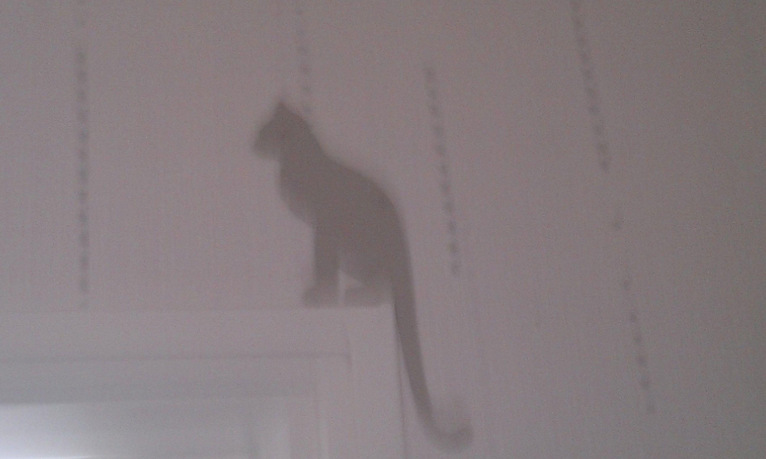 Découpage papier silhouette de chat, déco angle de porte !!