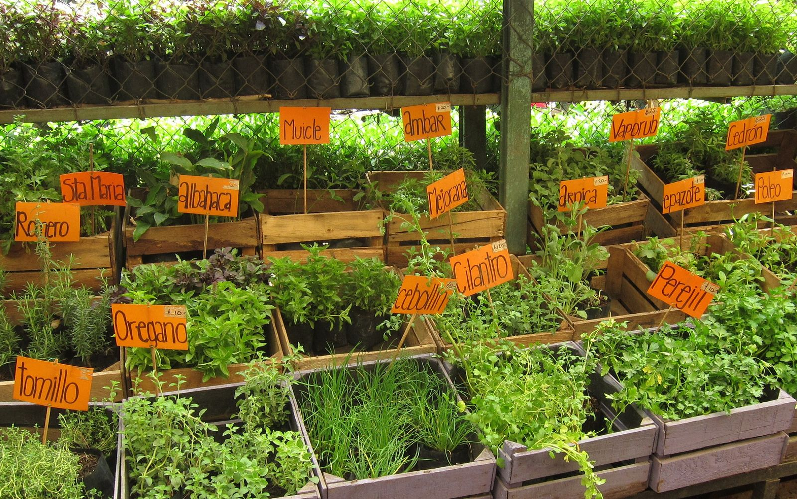 9 Herbs And Spices To Start A Medicinal Garden At Home With