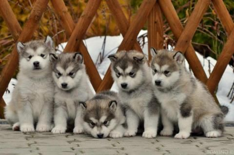 Adorable Sweet Little Pack Of Puppies 3 3 3 Cute Animals