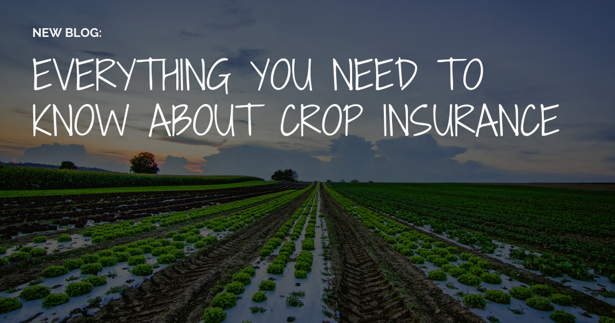 Crop insurance protects farmers and agricultural producers