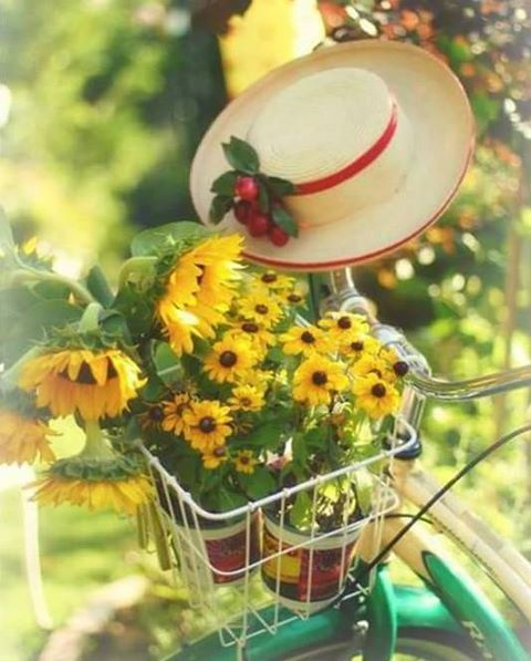 Bright spring flowers flowered bicycles pinterest bright bright spring flowers mightylinksfo