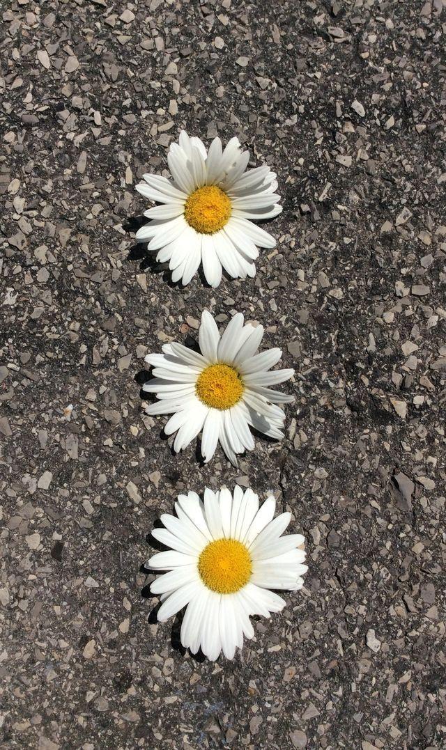 Pin em dirty daisy