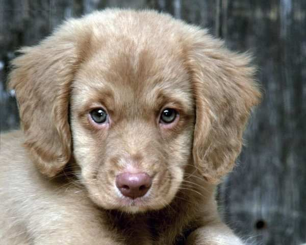 Hypoallergenic Dog Breed And Photos Cute Animals Pets Puppies