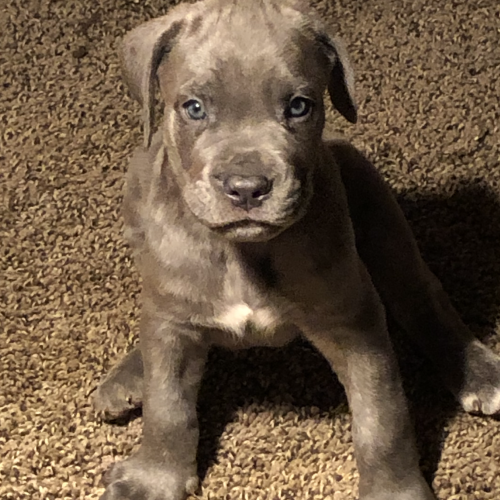 Pin On Puppies For Sale