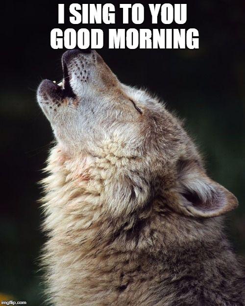 Wolf Wolves Meme Generator Imgflip Wolf Howling Wolf Dog