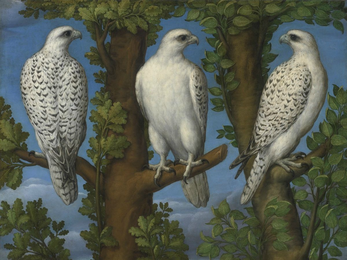 Lombard Master, portrait of a gyrfalcon viewed from three sides, 16th c., oil on canvas