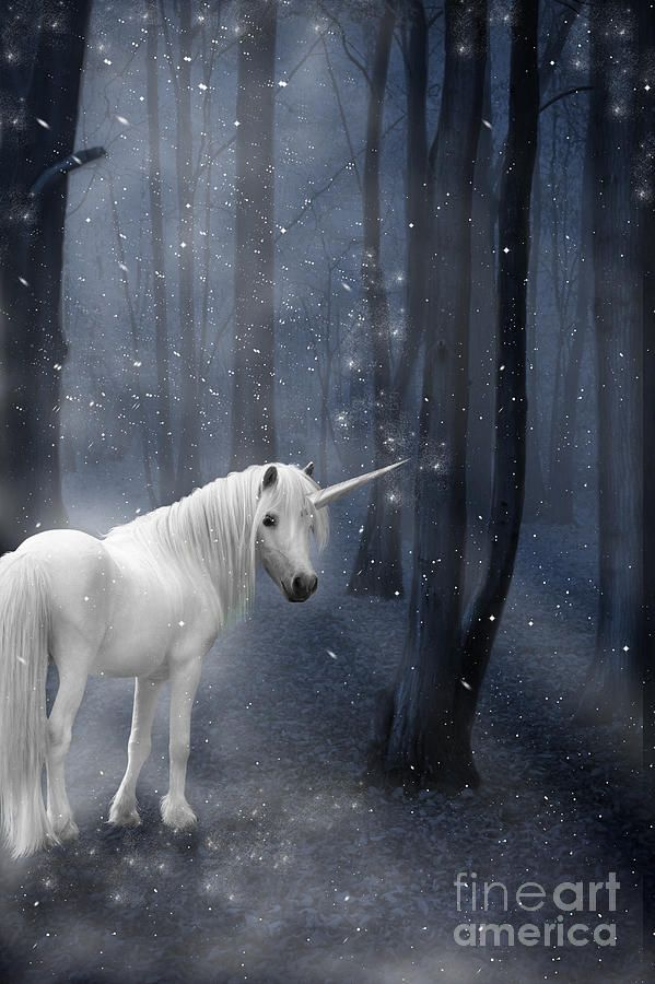 Unicorn Photograph - Beautiful Unicorn In Snowy Forest by Ethiriel Photography