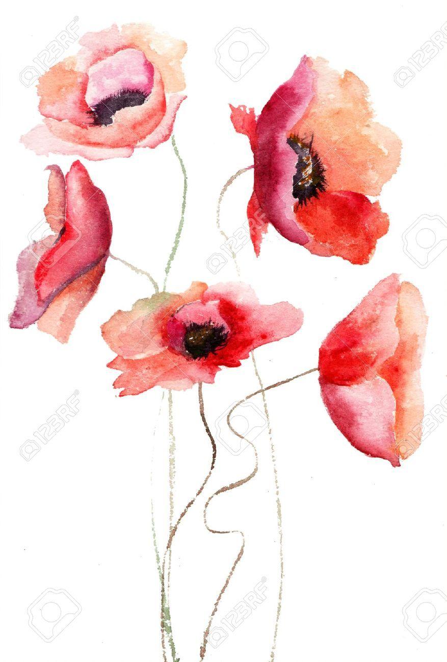 Beautiful Poppy Flowers Watercolor Painting In 2018 Sulu Boya