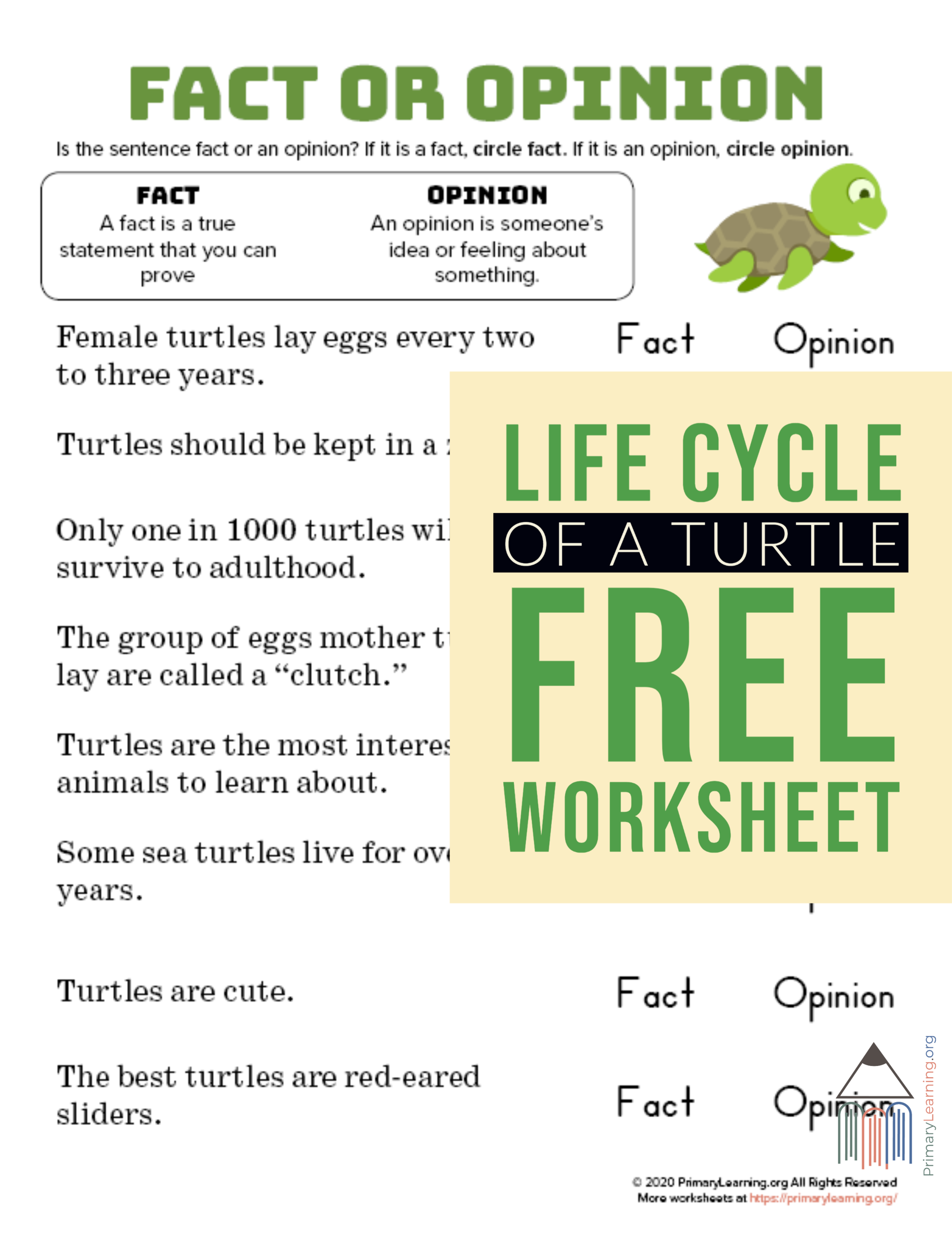 small resolution of Turtle - Facts and Opinions   PrimaryLearning.org   Fact and opinion