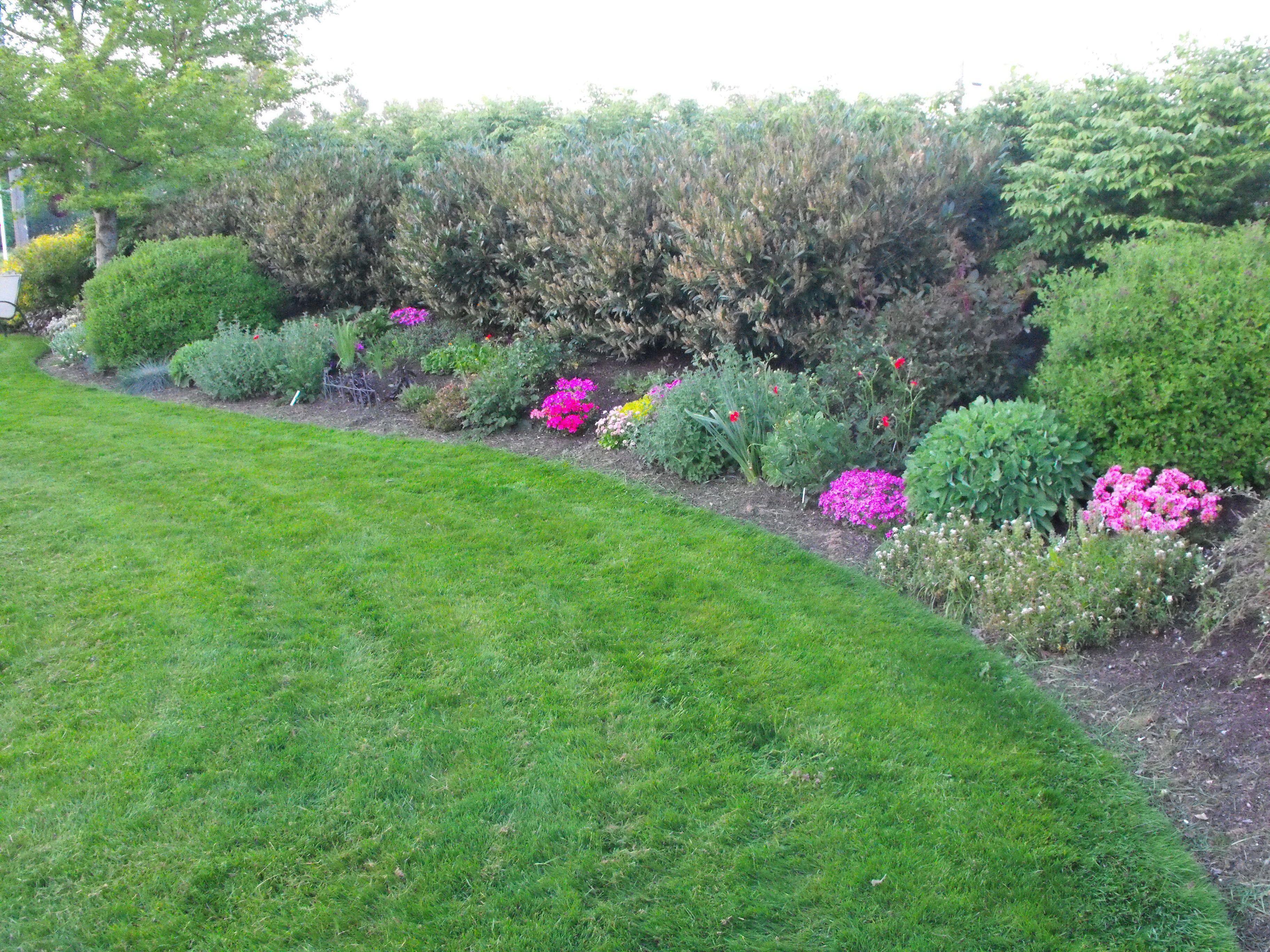 Pin By Patti Rowlson On Garden Inspiration Privacy Landscaping Burning Bush Shrub Laurel Shrub