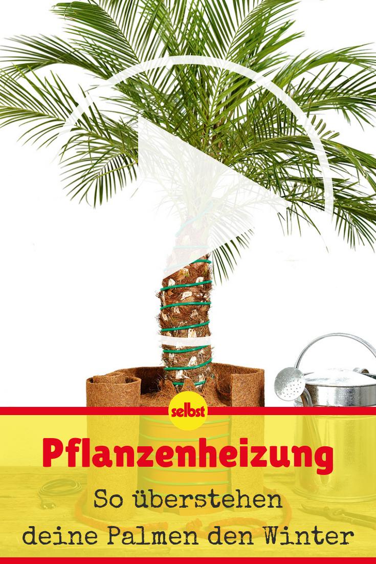 Palmen Uberwintern Selbst De Palmen Pflanzen Palmen Palmen Garten