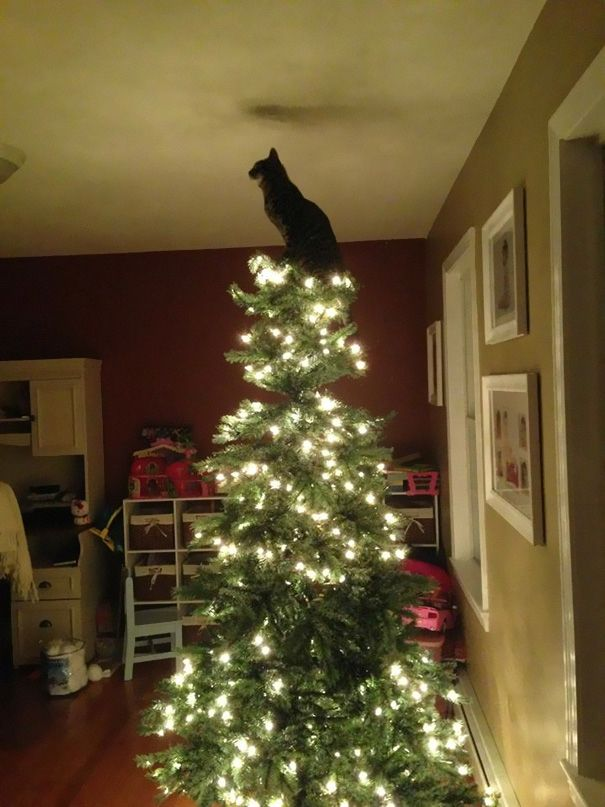 Cat sitting on top of a Christmas Tree with lights | Cat ...