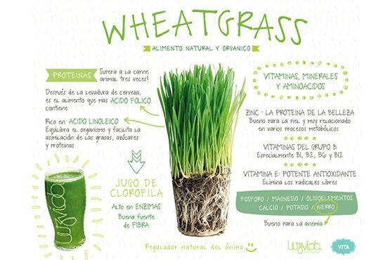 jugo de pasto de trigo - Buscar con Google
