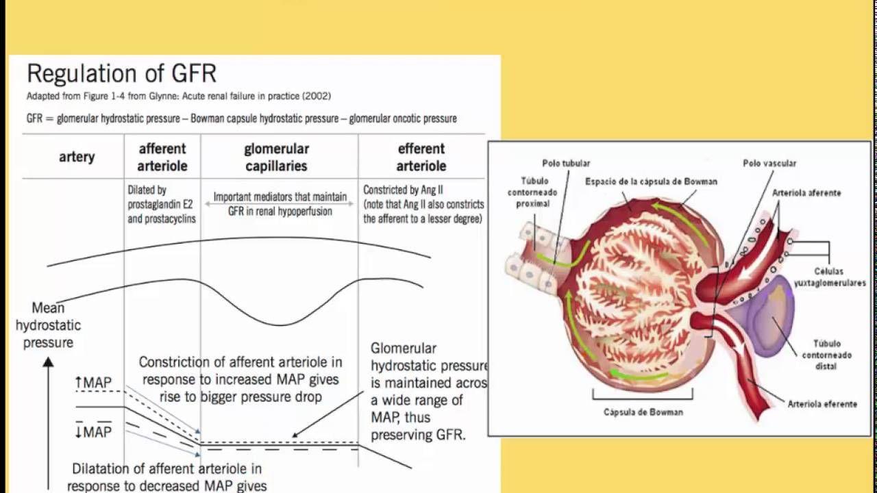 Fisiopatología de la Insuficiencia Renal Insuficiencia