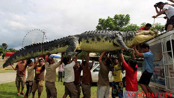 nằm mơ thấy cá sấu đánh số mấy