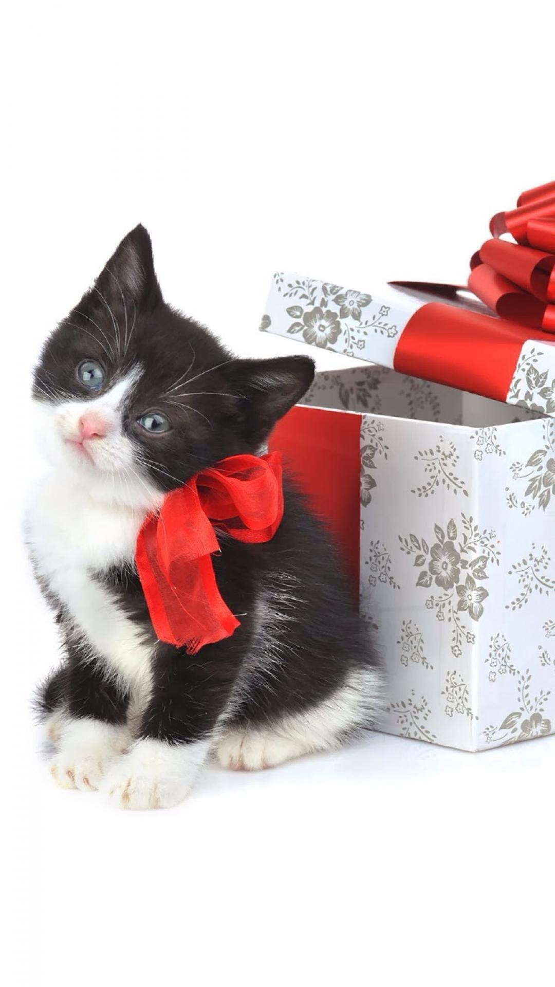 Christmas Kitten Present iPhone 6 wallpaper | Christmas Wallpaper ...