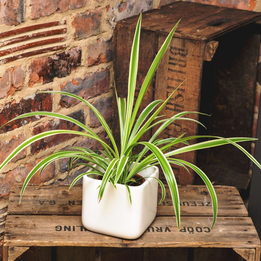 Breathe easier with these easy to care for houseplants
