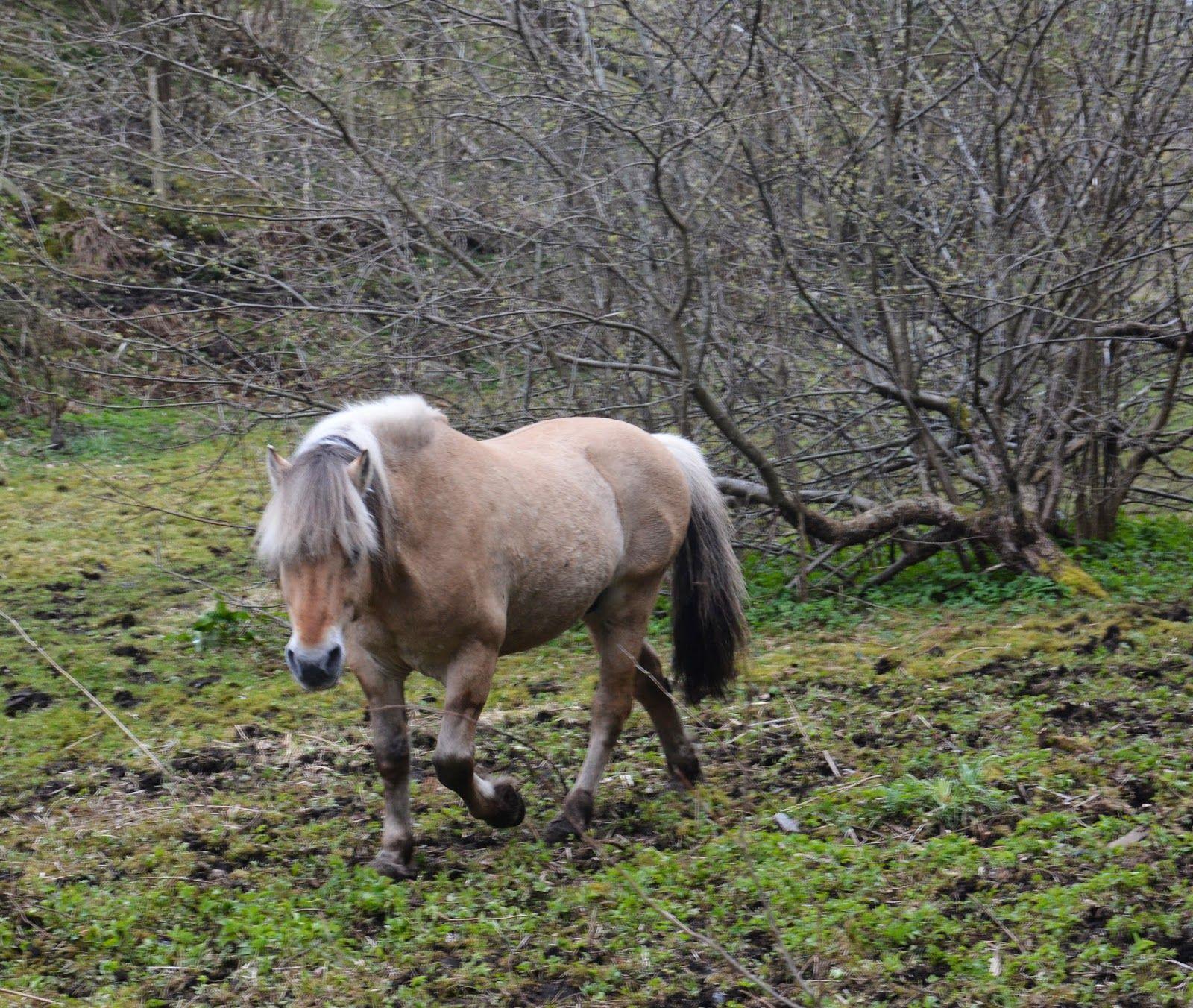Vardaneset:   Rastløs hest og fine dagerFor noen dager siden o...