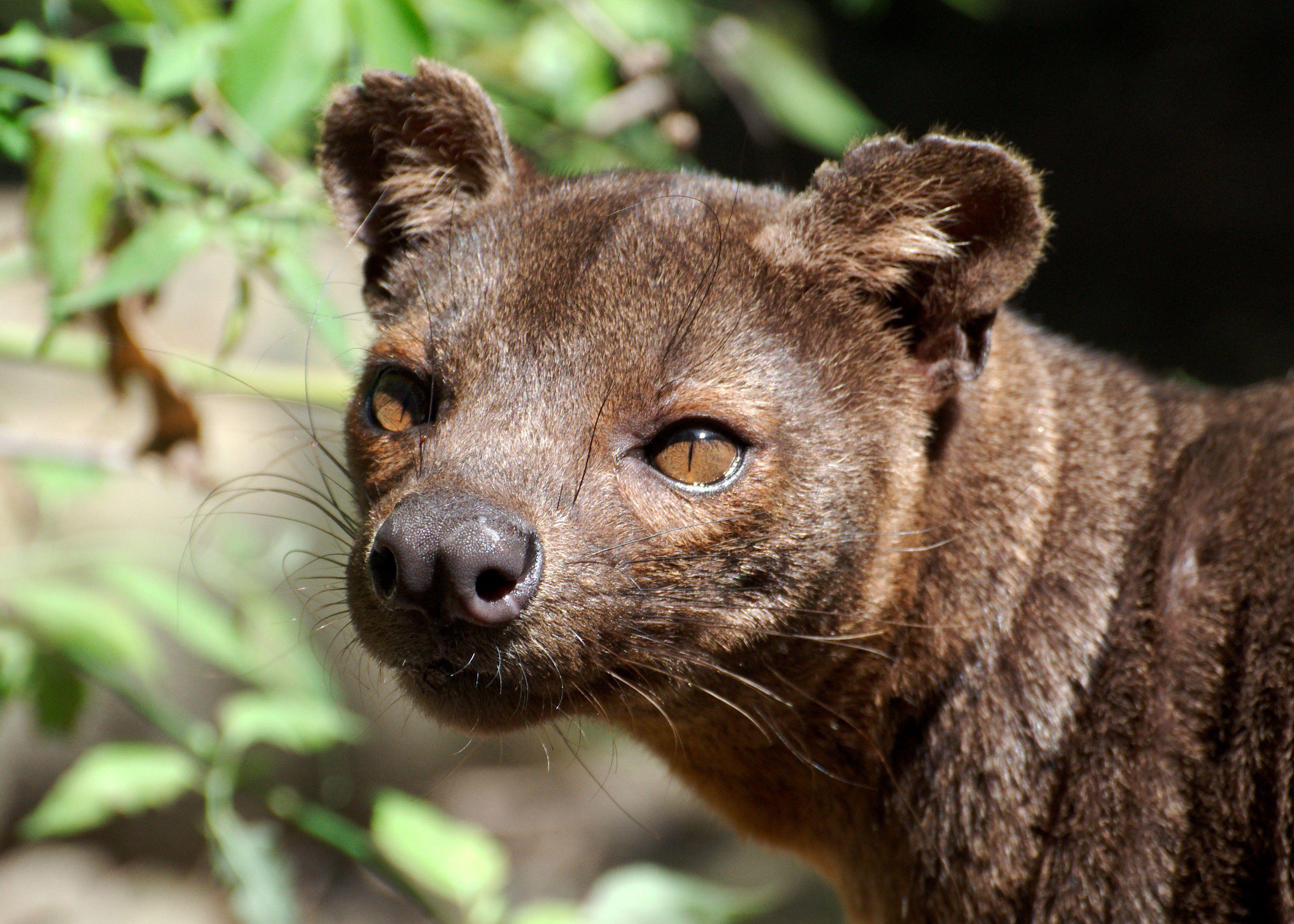Животные мадагаскара фото с названиями