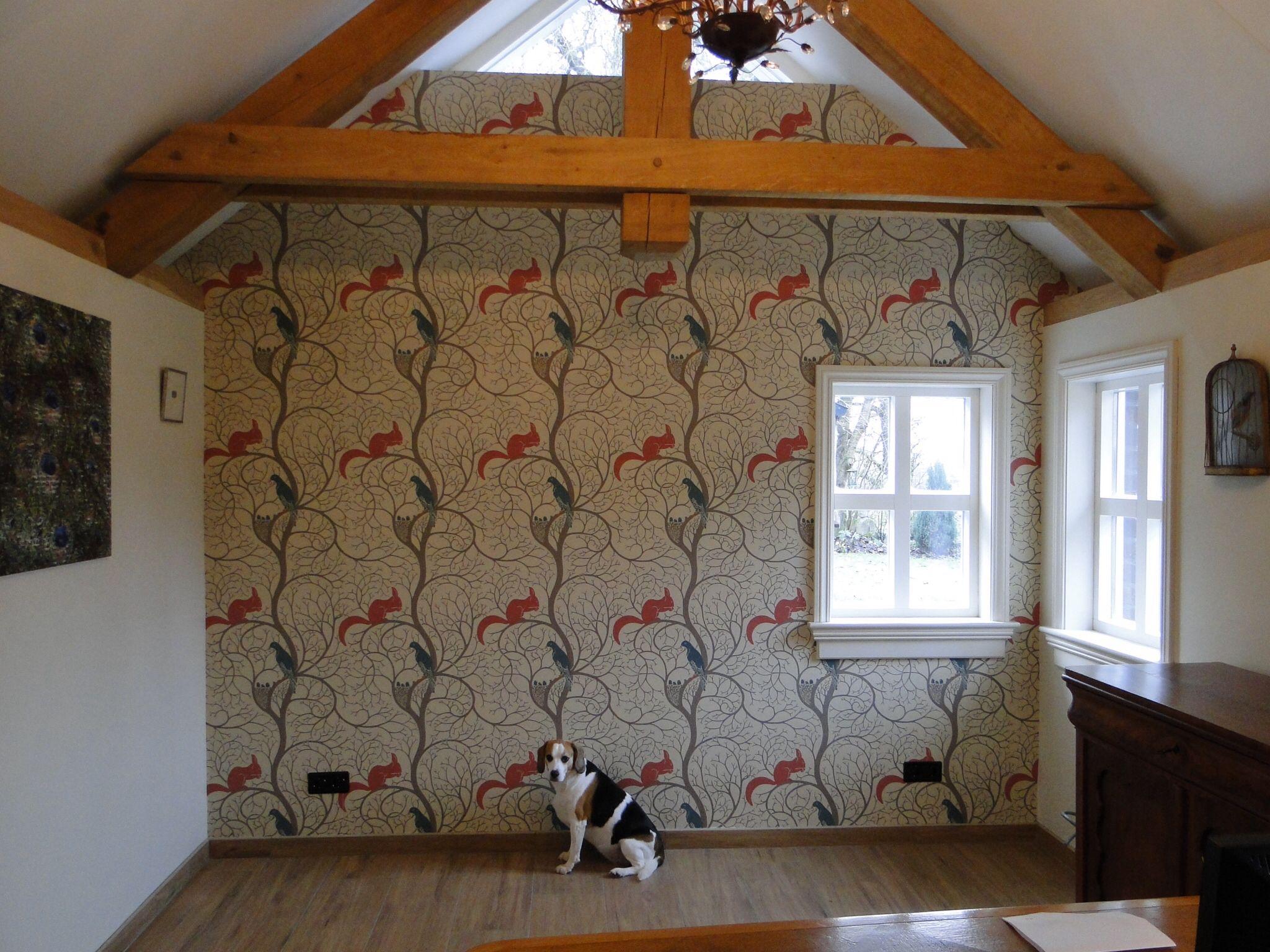 Bibi The Beagle Showing Off Our New Sanderson Squirrel Dove Wallpaper Wallpaper Wallpaper Bedroom Wallpaper Online