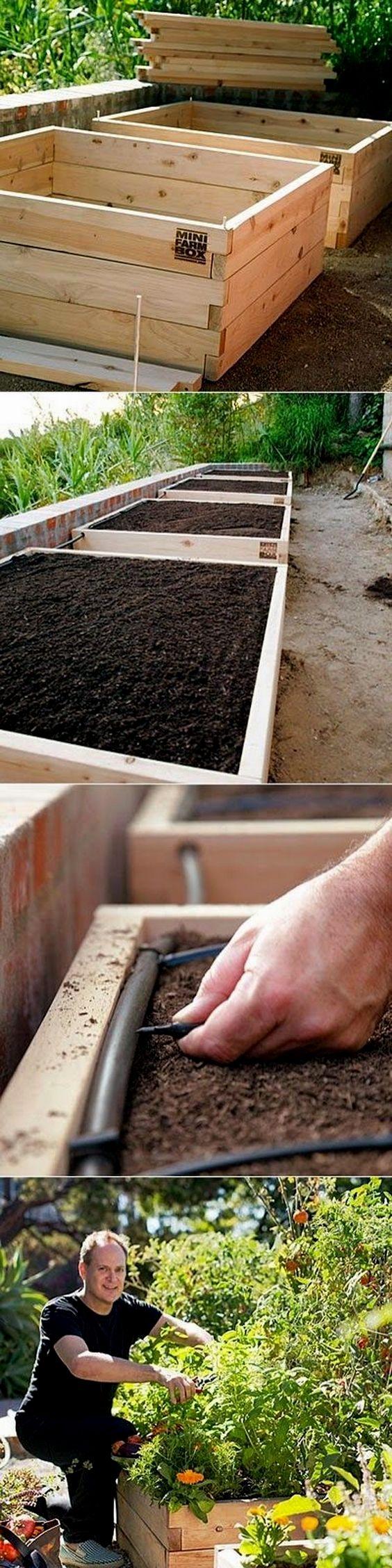 Vegetable (2020) Vegetable garden raised beds, Organic