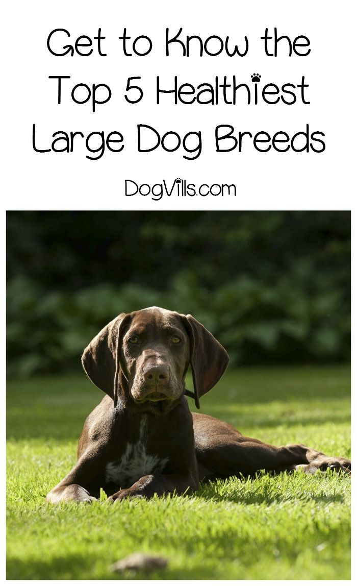 Large Of Healthiest Dog Breeds