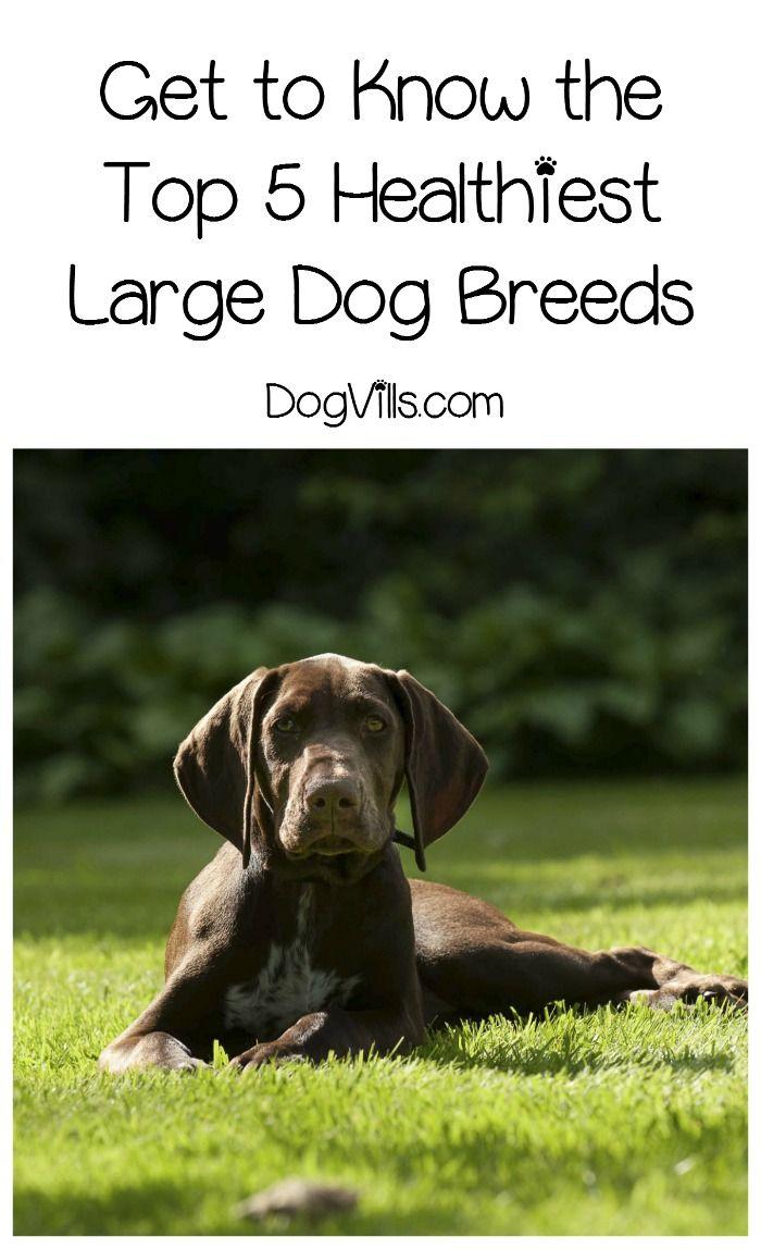Medium Of Healthiest Dog Breeds