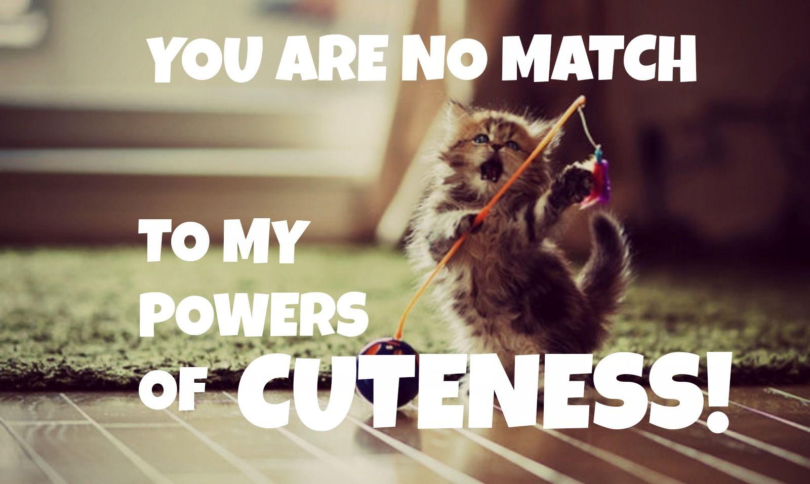 Pin by Savannah Bason on cute animals Cute animal quotes