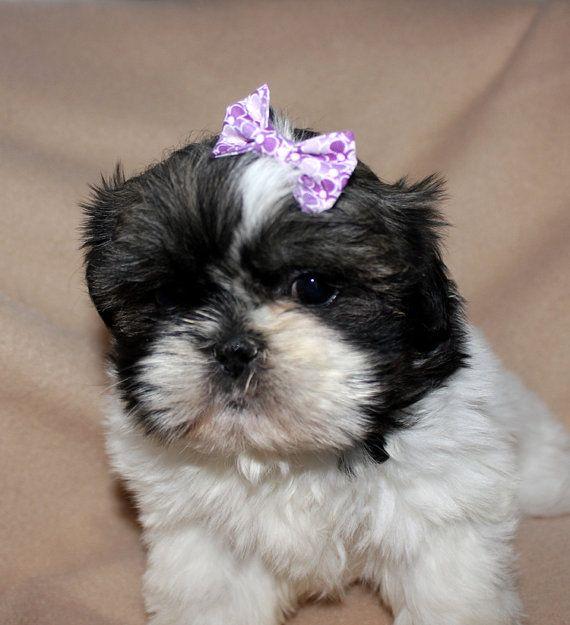 Small Purple Hair Bow Little Pups Light Mauve Flower Fabric Top